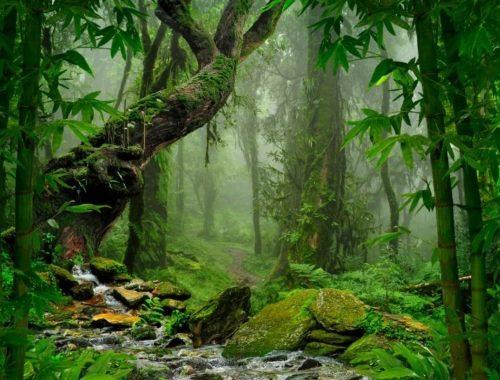 wirkung mudra ayahuasca pflanzenmedizin