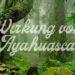 Wirkung von Ayahuasca Dschungel