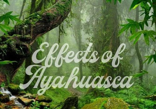 Effects of Ayahuasca