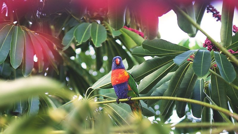 Jungle Ayahuasca Birds
