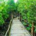 ayahuasca pflanzenmedizin