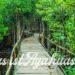 Was ist Ayahuasca Dschungel