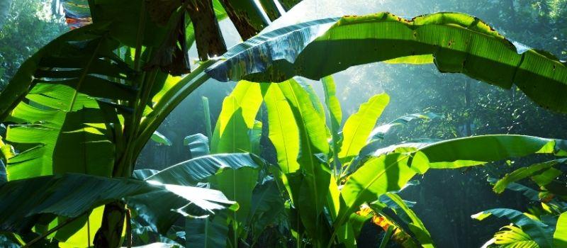 Is ayahuasca dangerous