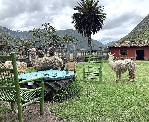 Ayahuasca-Retreat